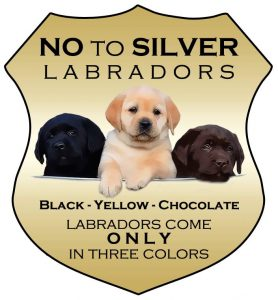 Fox Red Labrador Breeder | Blackfork Labradors | Fox Red Lab