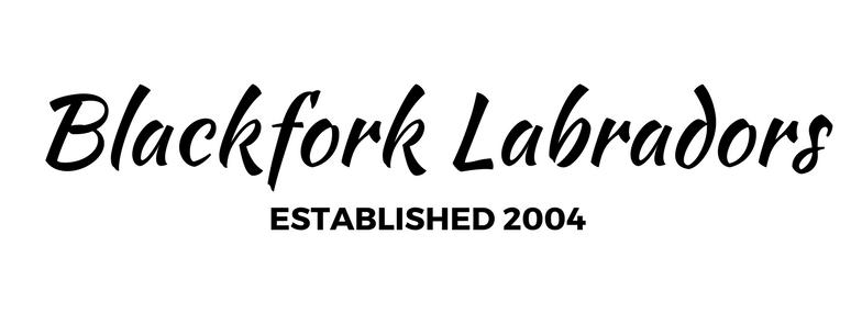 Fox Red Labrador Breeder | Blackfork Labradors | Fox Red Lab Puppies